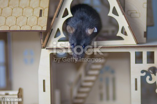 istock The concept of acrophobia. The mouse is afraid of heights. 1150559498