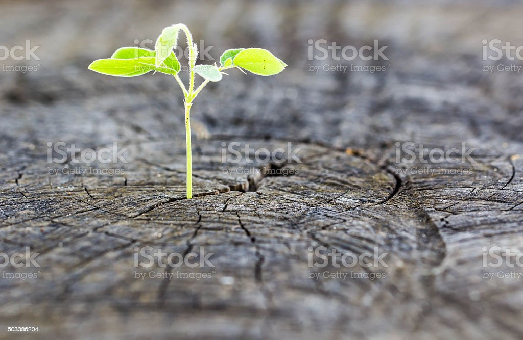 The concept of business growth . stock photo