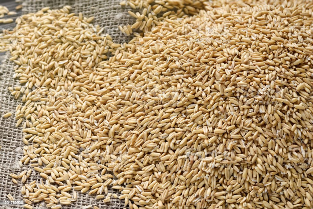 The concept of healthy eating. Whole grains of oats and oat spikelets. royalty-free stock photo
