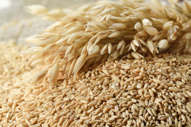 The concept of healthy eating. Whole grains of oats and oat spikelets. The concept of healthy eating. Whole grains of oats and oat spikelets. oat crop stock pictures, royalty-free photos & images