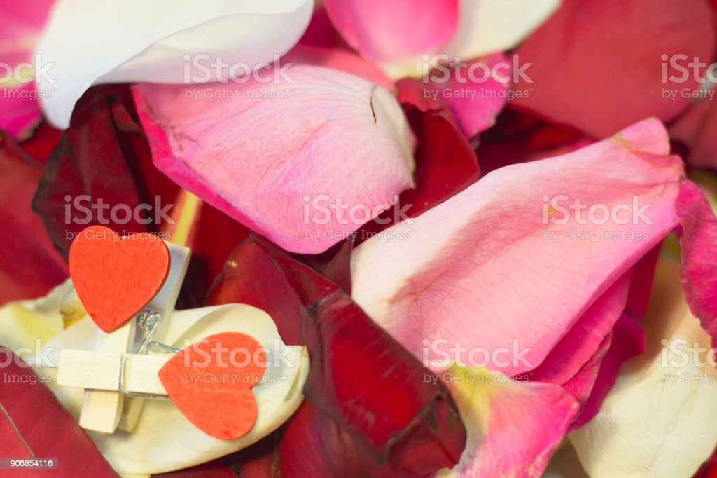 The concept of holidays with rose petals stock photo