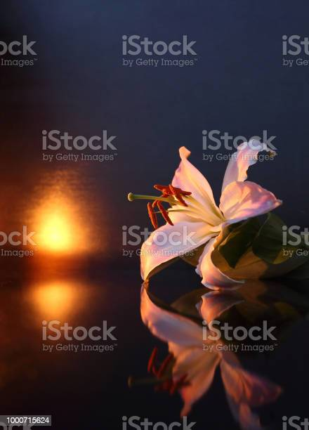 The concept of mourning white lily flowers on a dark background we picture id1000715624?b=1&k=6&m=1000715624&s=612x612&h=6kwlcx w6md2cs70eksf3dpn2cjq8i pz7evgjlg me=