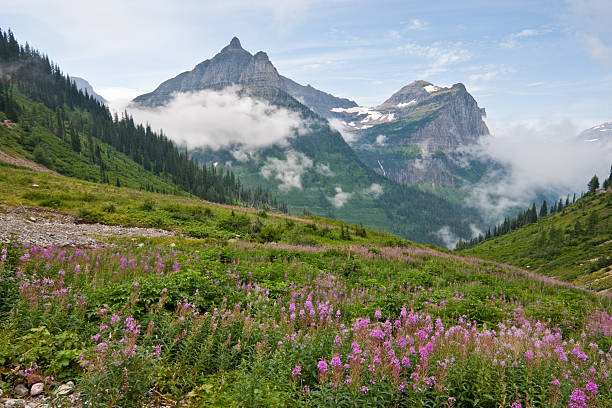 mounts oberlin and cannon from big bend - logan pass stock pictures, royalty-free photos & images