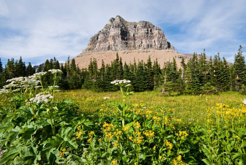 Pollock Mountain From Logan Pass Stock Photo - Download Image Now