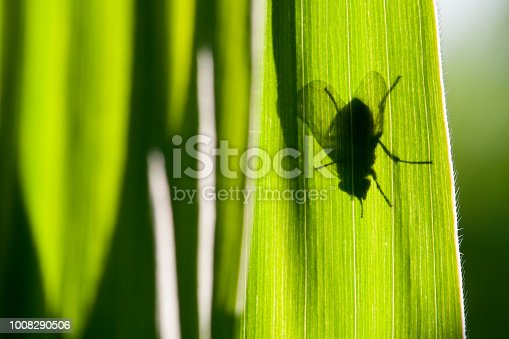 istock The contours of the fly. 1008290506