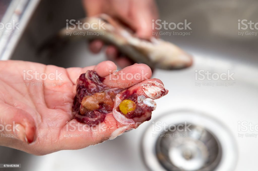 The cook pulls the guts out of the fish royalty-free stock photo