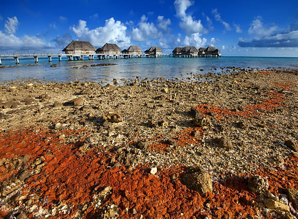 The coral coast and lodges over  ocean.