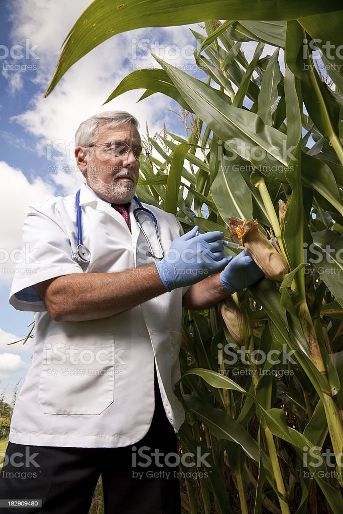 The Corn Doctor stock photo