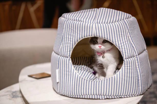 The cosiest cat bed picture id1187105306?b=1&k=6&m=1187105306&s=612x612&w=0&h=yu1xpiu1lemkm0akqimmkomlvidpf63ecvuqwk7k8q0=