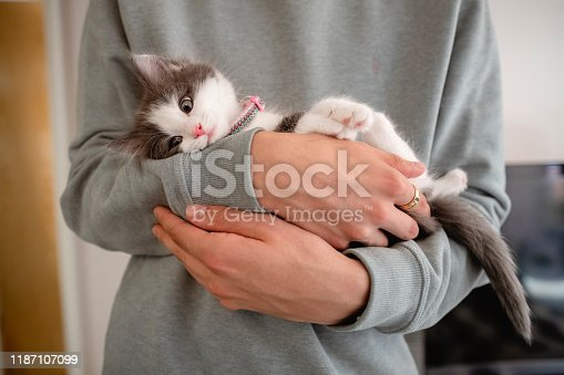 Unrecognisable man holding a kitten in his arms.
