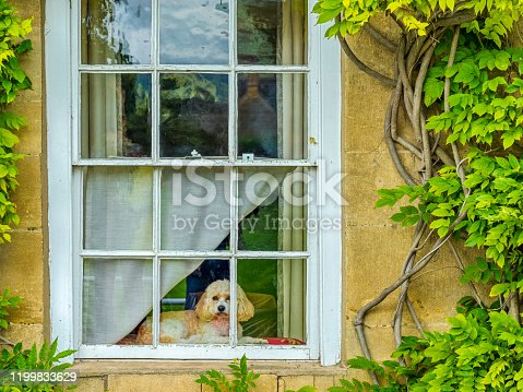 Quaint rustic window with dog in the town of Broadway in the Cotswolds area of the United Kingdom