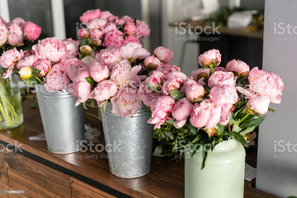 Pink peonies in a metal vase. Beautiful peony flower for catalog or...