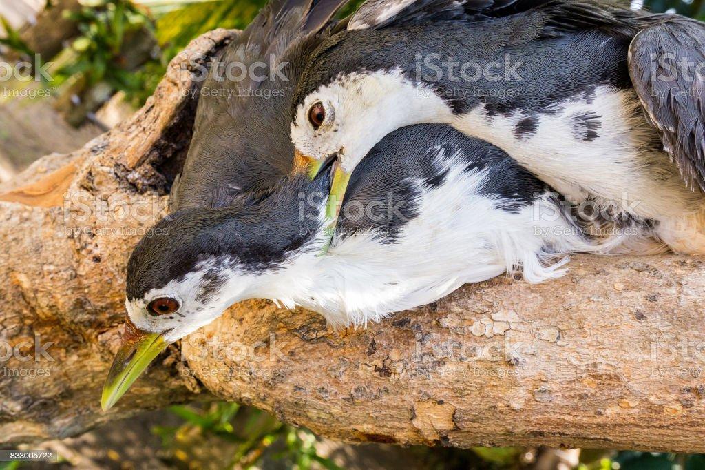 The couple birds stock photo
