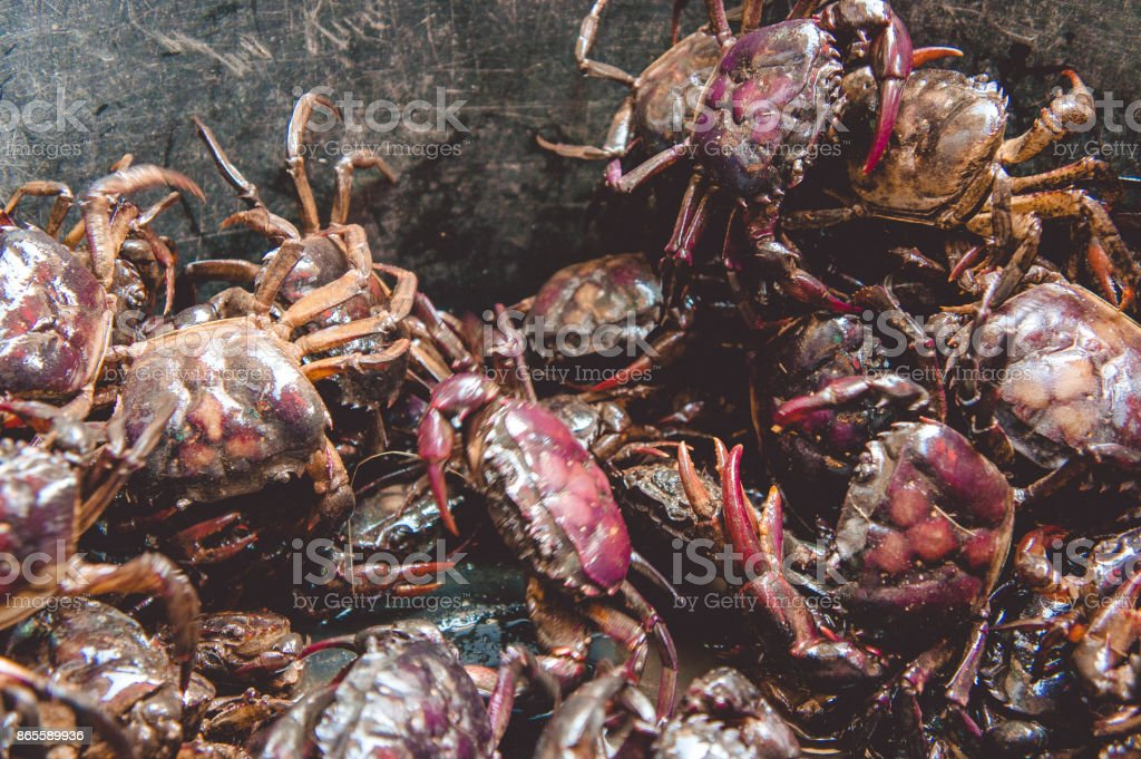 The crab in the basin captured from the field of aquatic animals. stock photo