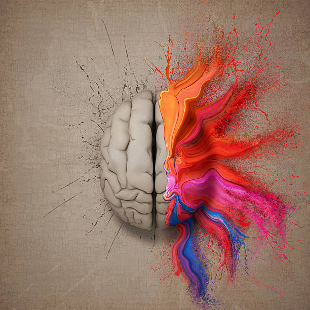 The Creative Brain stock photo