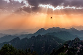 The majestic bird hovering over the Great Wall of China under a beautiful sky.
