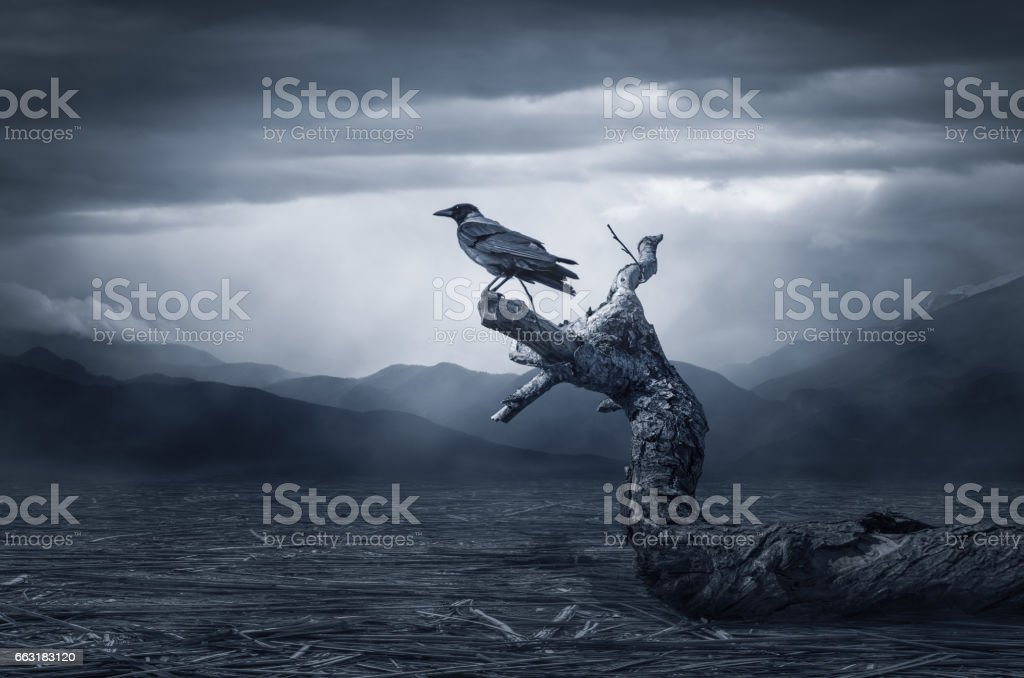 The crow on Branch stock photo