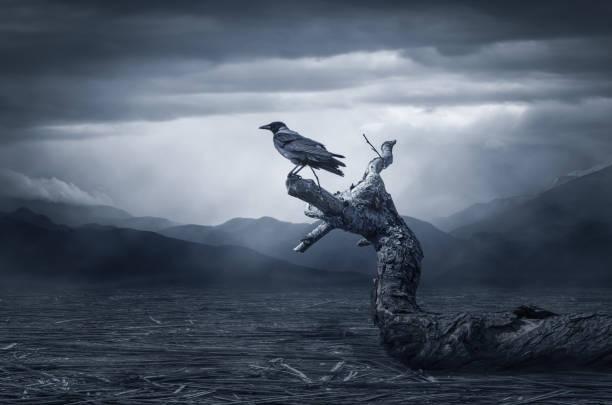 die krähe auf branch - gothic bilder stock-fotos und bilder