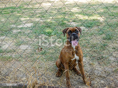 A friendly dog watching you behind the wire fence