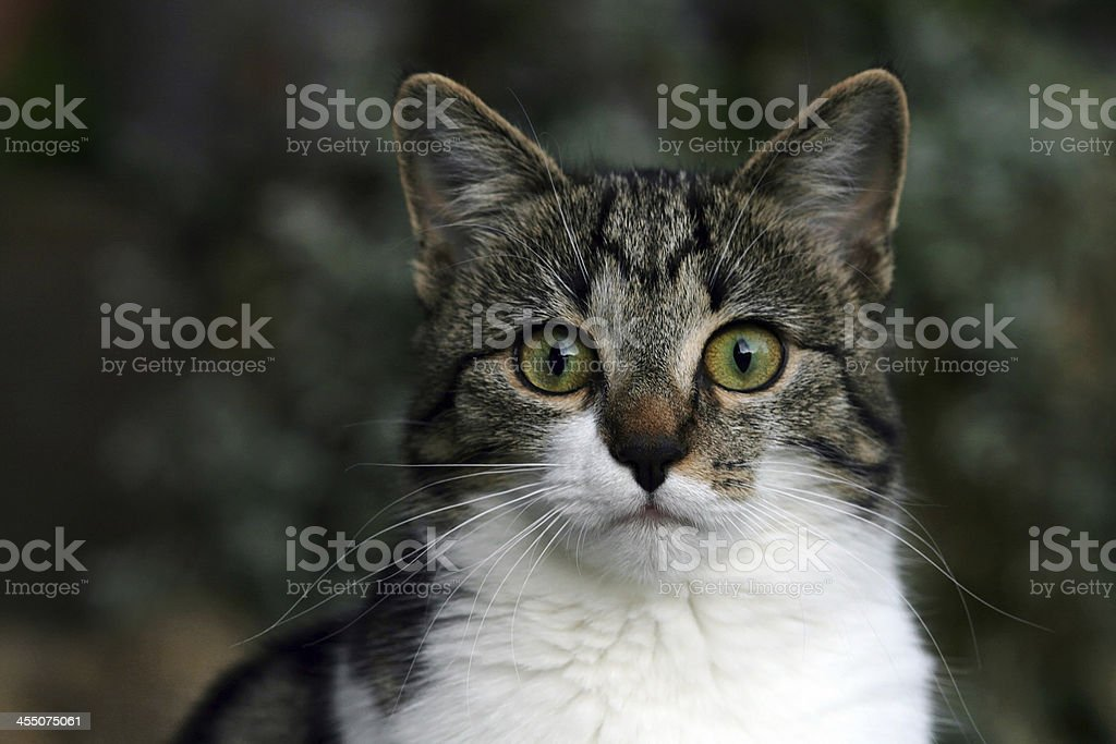 the curious cat stock photo