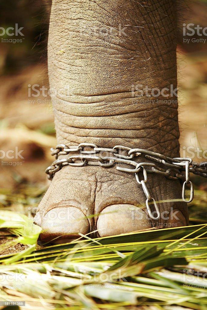 The curse of captivity royalty-free stock photo