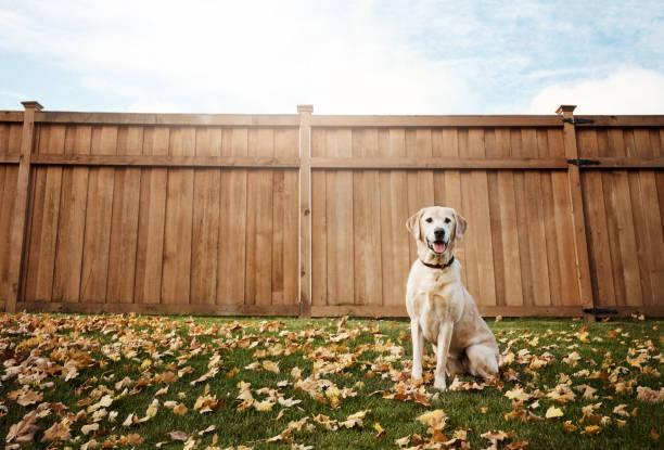 鎮上最可愛的狗 - 衣領 個照片及圖片檔