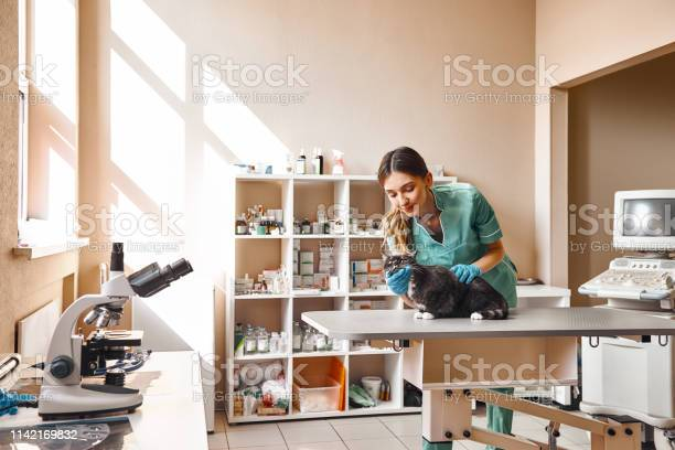 The cutest patient young and positive female veterinarian is making a picture id1142169832?b=1&k=6&m=1142169832&s=612x612&h=kerx5ybkb1gqtazuocjmzo6nhjtdom qwc8irb1z5uy=