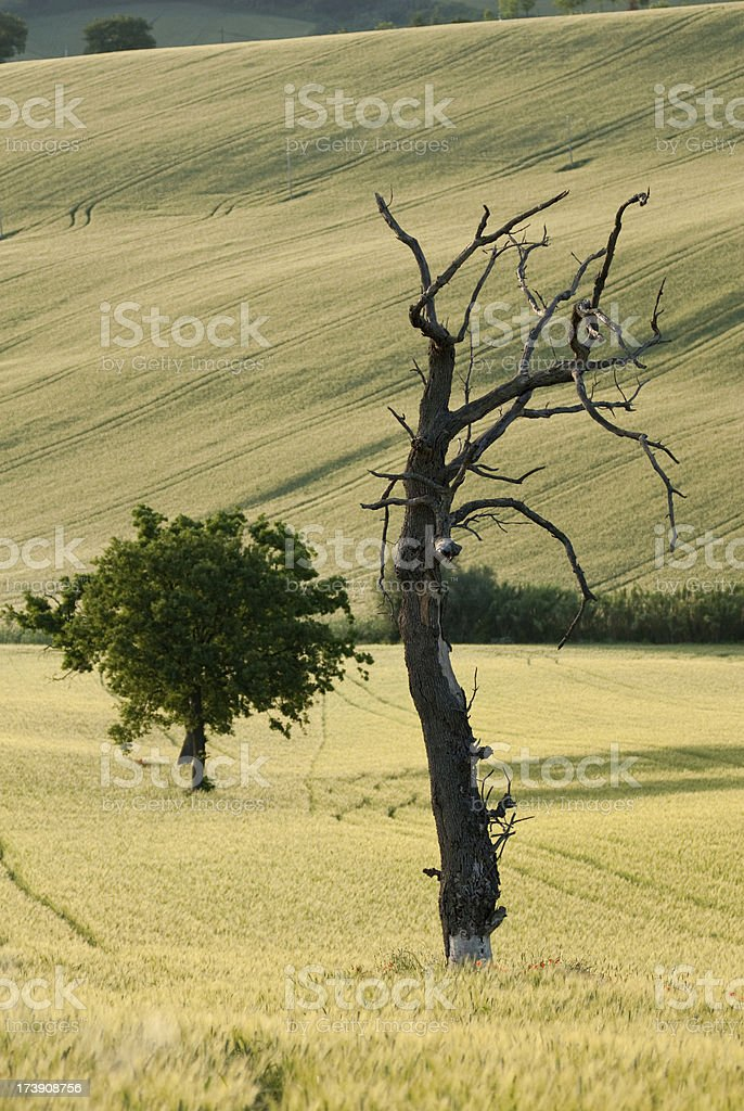 The cycle of life royalty-free stock photo