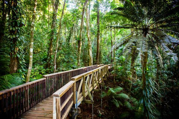 The Daintree Jindalba Boardwalk in Australia stock photo