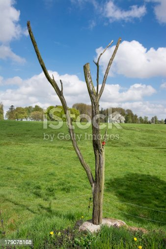 istock The Danger or Lone Tree for  Royal Newfoundland Regiment 179078168