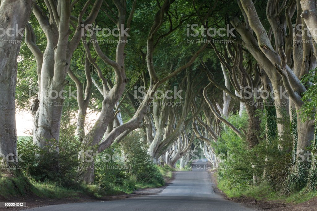Der dunkle Rand - Lizenzfrei Baum Stock-Foto