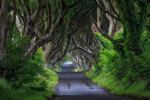 istock The Dark Hedge, Northern Ireland. 588583206