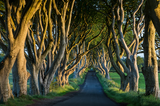 The Dark Hedges County Antrim Northern Ireland Stock Photo - Download Image Now