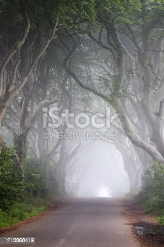 The Dark Hedges in the morging with fog - Ireland