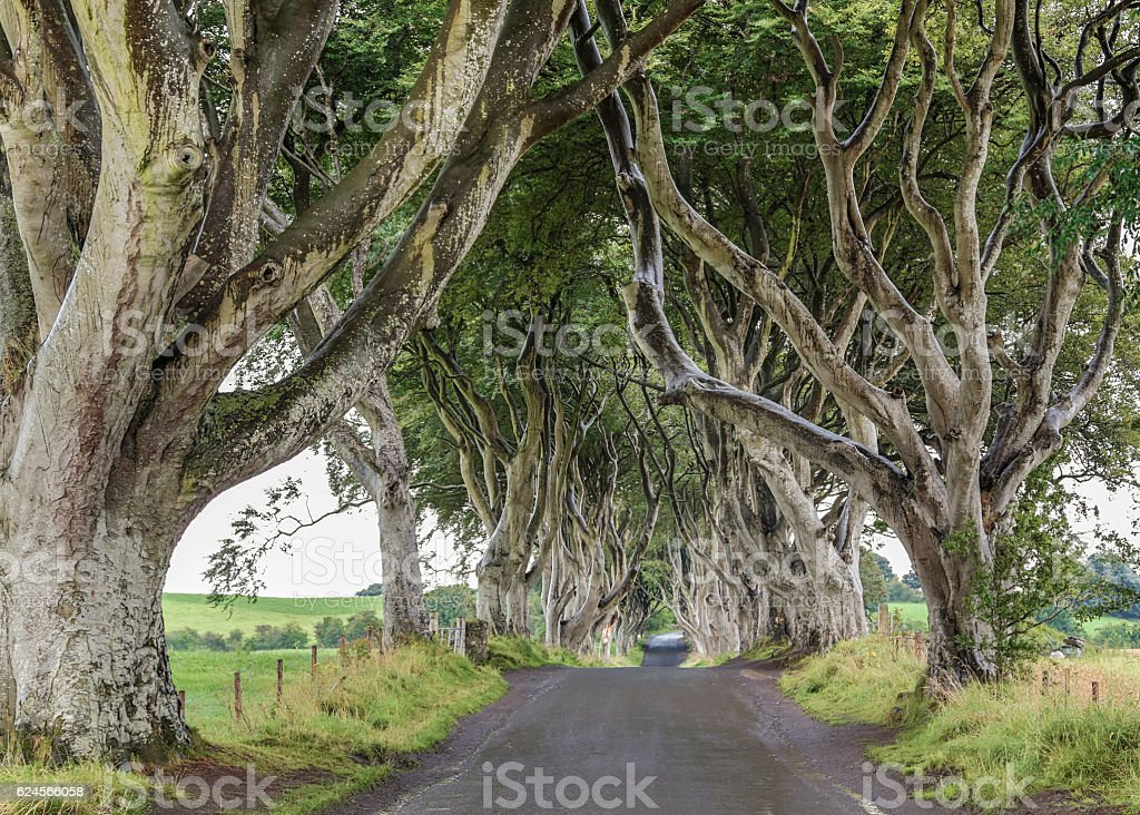 The Dark Hedges. stock photo