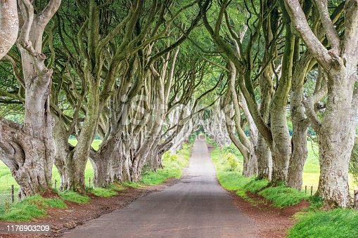 The Dark Hedges, a treelined road with rows of picturesque beech trees in Northern Ireland, UK.