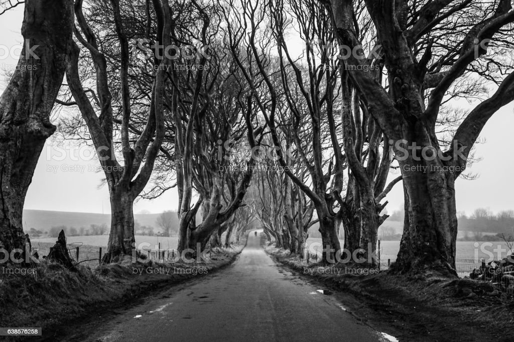 The Dark Hedges Tunnel Couple stock photo