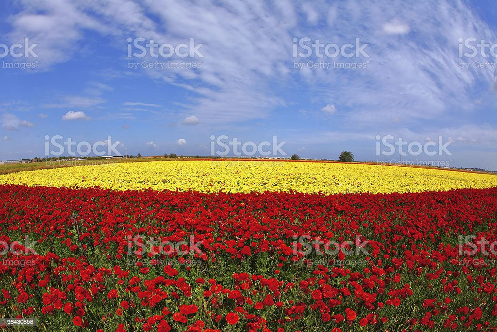 The day in fields flowers buttercups royalty-free stock photo