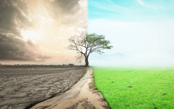 The day the world changed concept Half drought and half abundance tree standing landscape background hope concept stock pictures, royalty-free photos & images