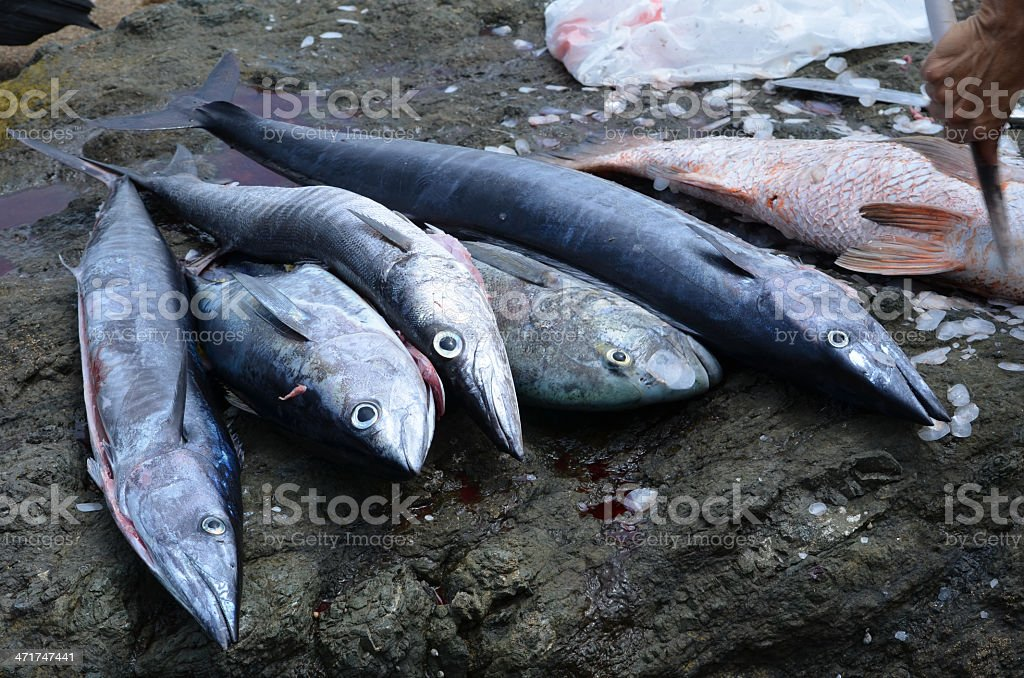 The Days Catch royalty-free stock photo