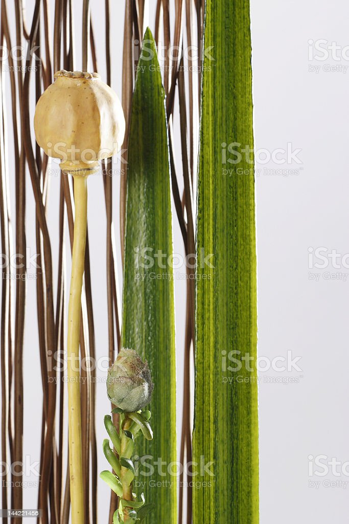 The decoration, royalty-free stock photo