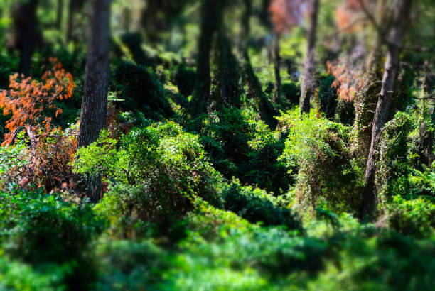the deep green. tropical rain forest. background - jungle - forest bathing foto e immagini stock