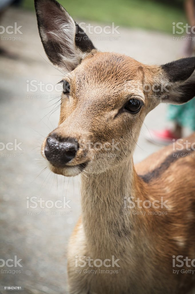 Il deer - foto stock