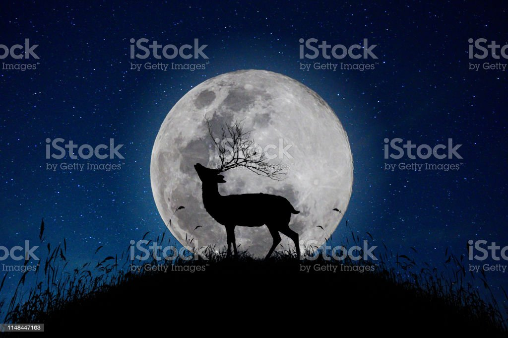 The deer stands on the mountain a large moon background in the night...