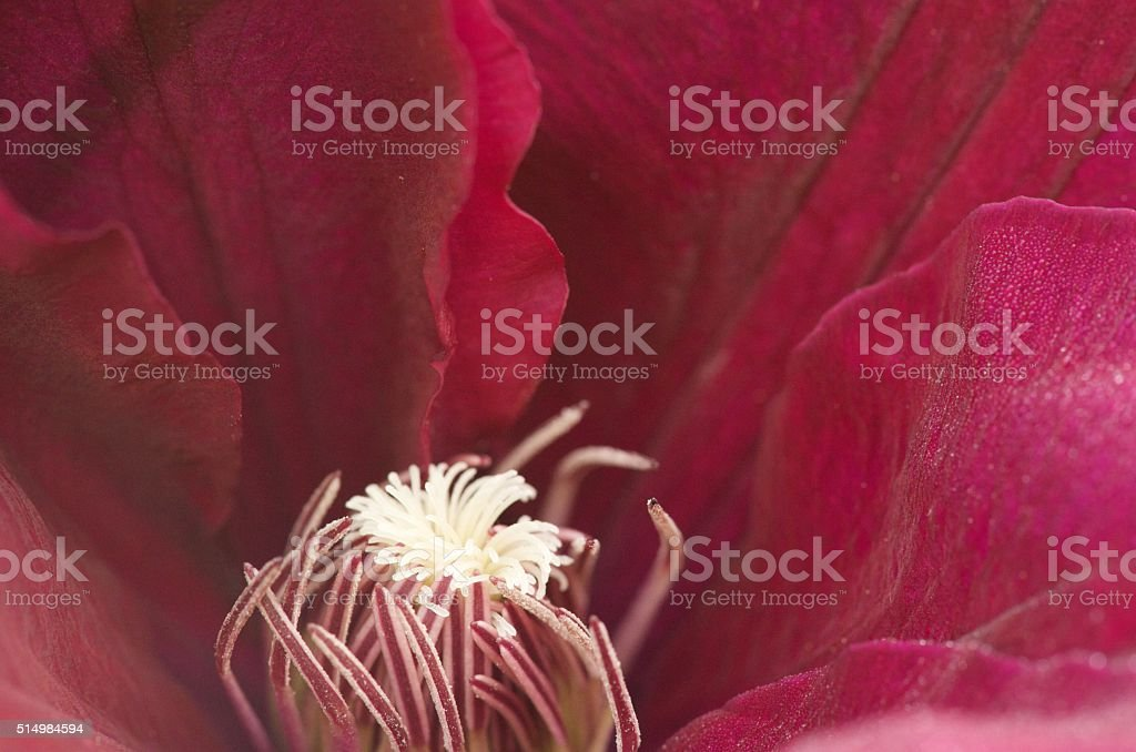 The delicate inner parts of a flower stock photo