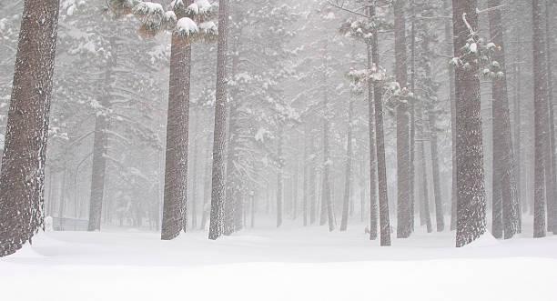 die dichte winterlichen woods - lake tahoe winter stock-fotos und bilder