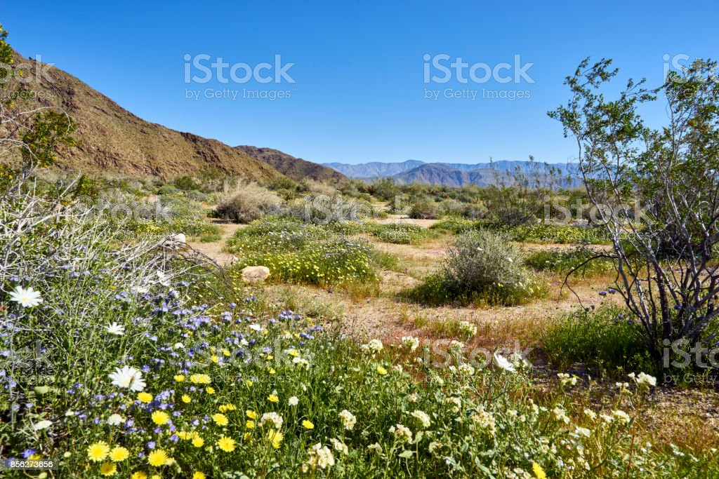 the desert comes alive with flowers and new growth stock photo
