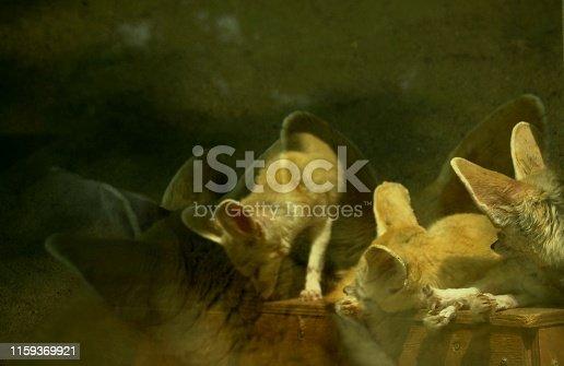 사막여우의 노는 모습이 귀엽다