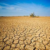 The Desert In Western India