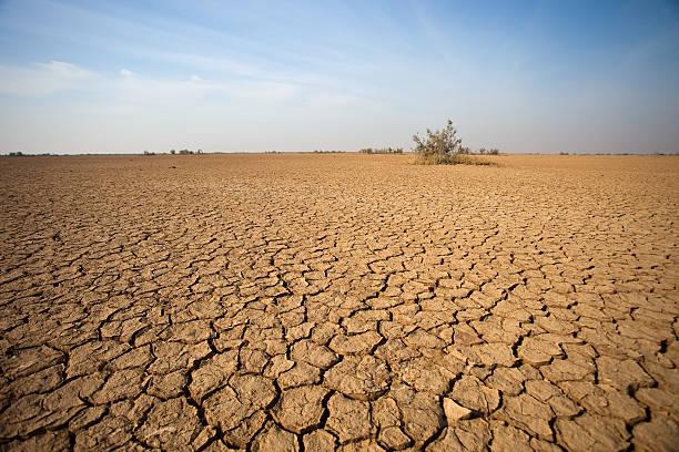 the desert - kuraklık stok fotoğraflar ve resimler